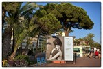 Fotofestival Cannes